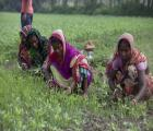 Women working for livelihood while their husband migrate to Indian